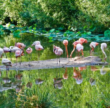 Parc animalier & botanique et Parcabout®