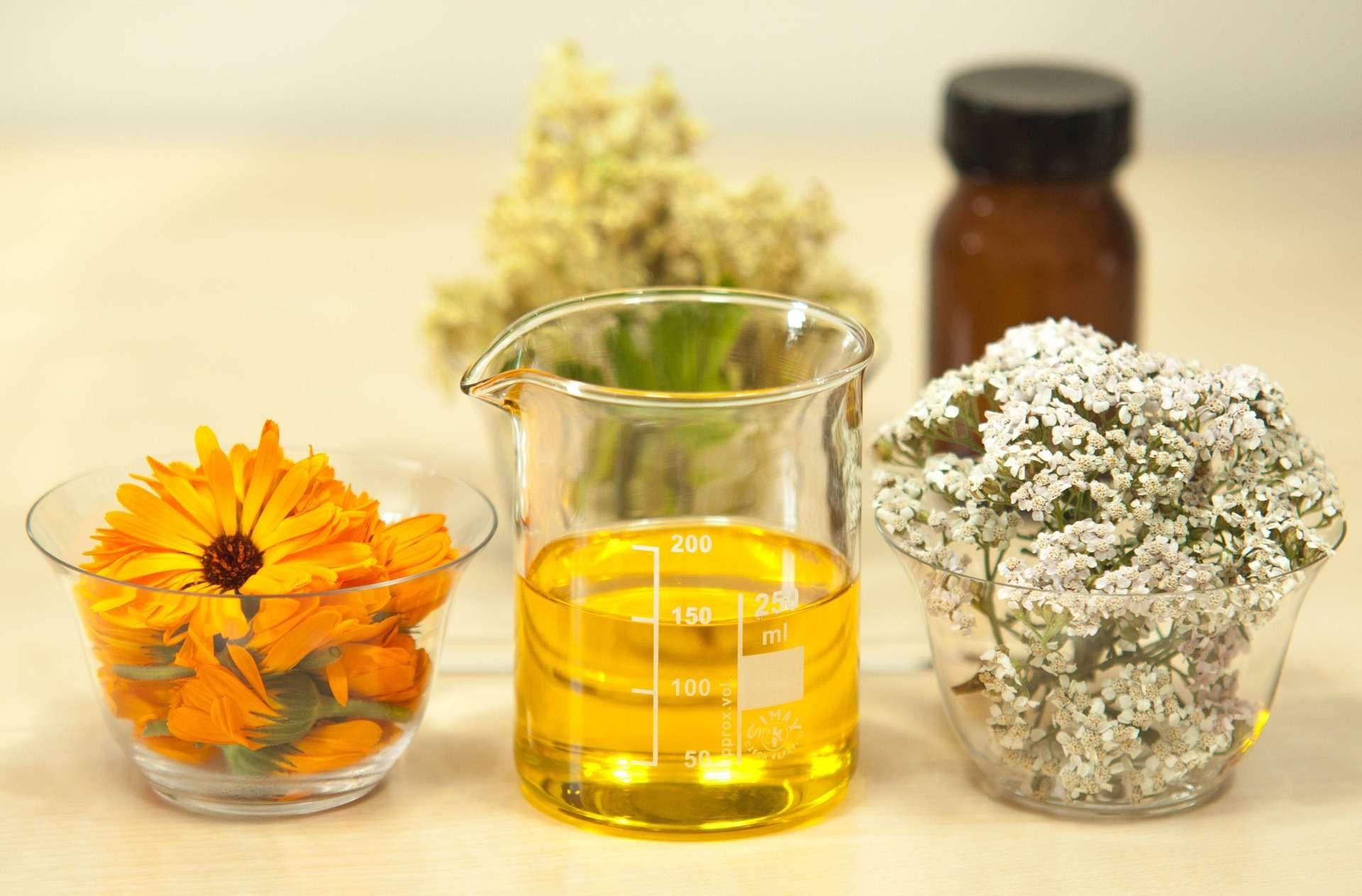2_Atelier pratique d'herboristerie