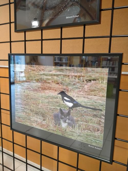 1-exposition piafs drôles d'oiseaux parisiens