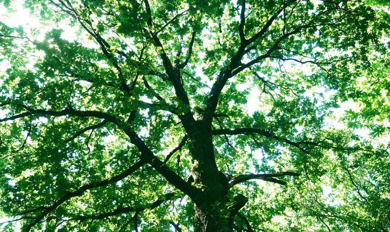 1_les vertus de la forêt à Trédion