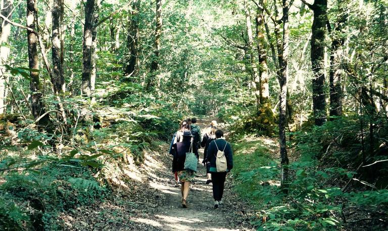 4_les vertus de la forêt à Trédion