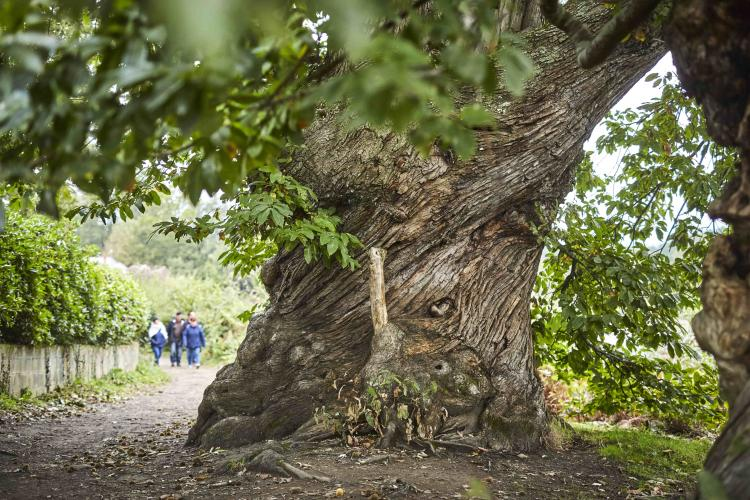 Un voyage en hiver. Secrets d'arbres