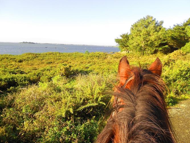 1_Sortie découverte à cheval séné