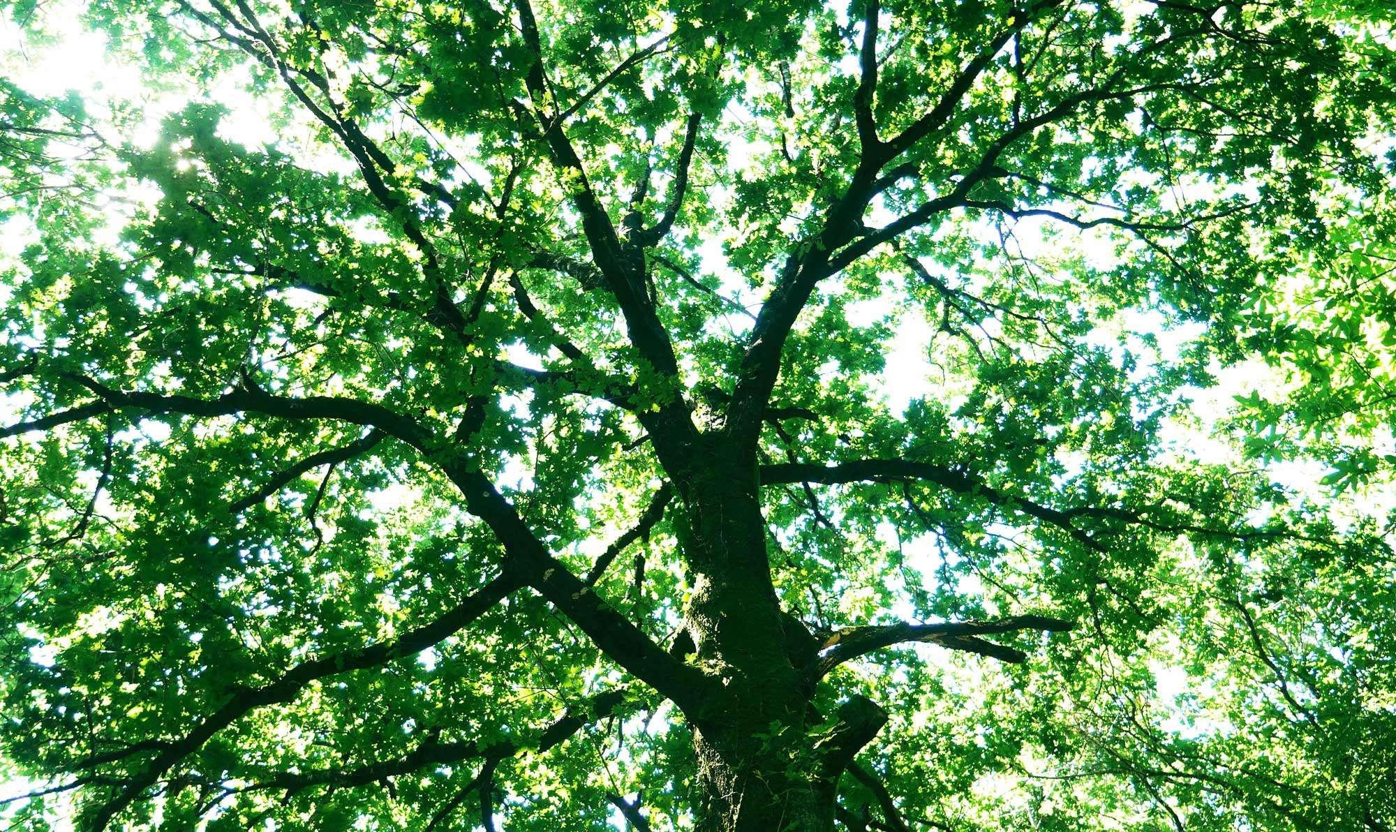 1_sortie les vertus de la forêt