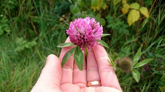 3_Sortie plantes sauvages comestibles et médicinales »