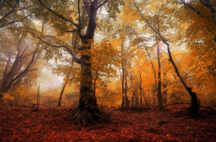 5_A la rencontre des arbres