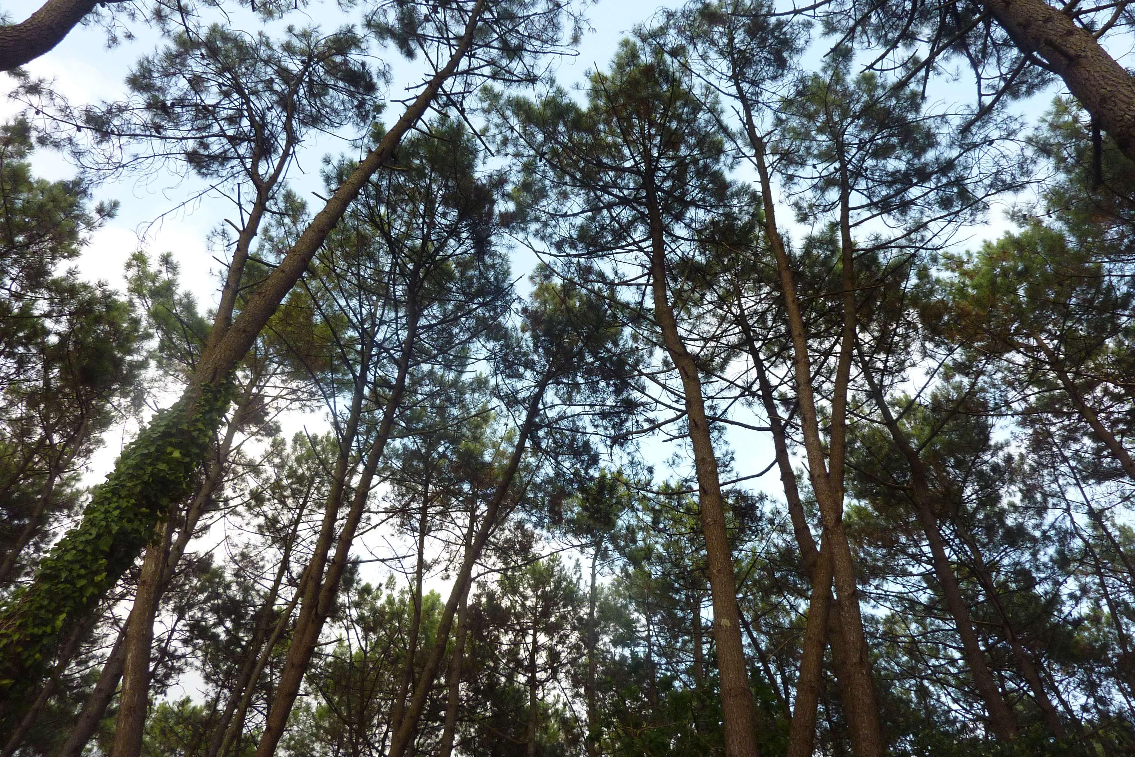 3_A la rencontre des arbres