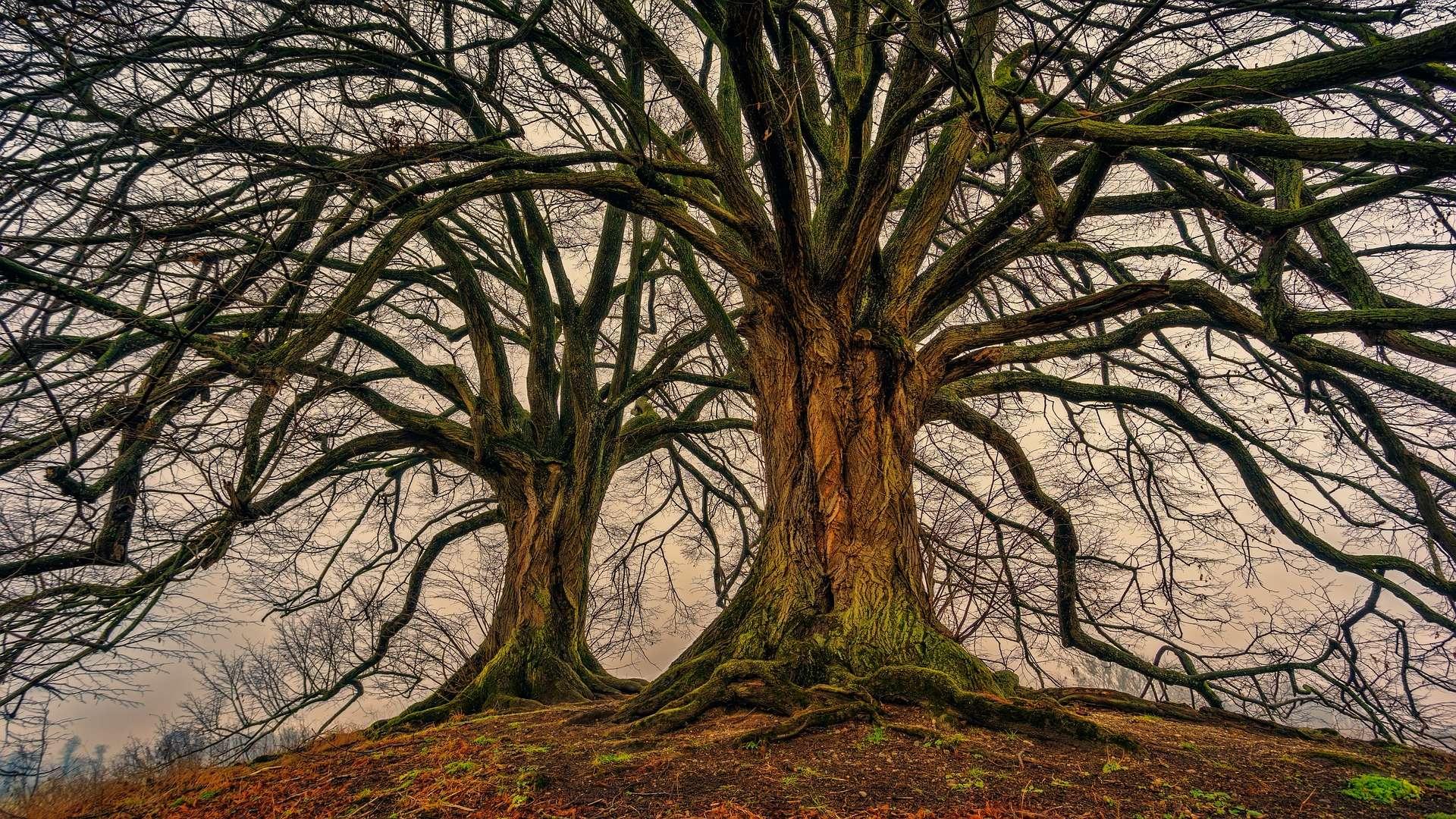 4_A la rencontre des arbres