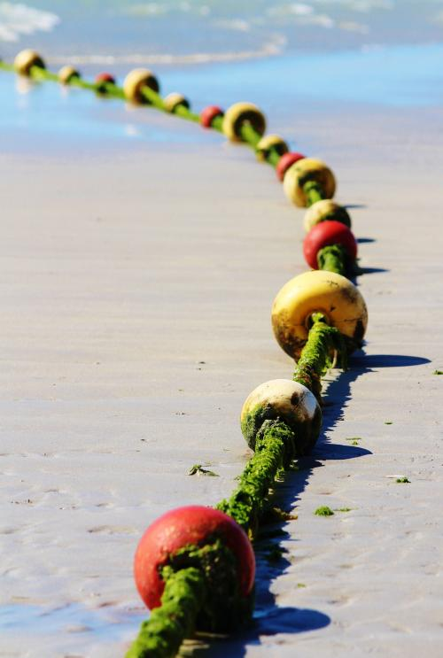 1_Algues littoral