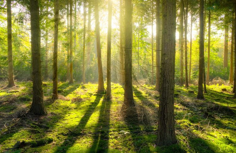 2_observons les arbres