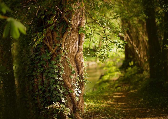 1_observons les arbres