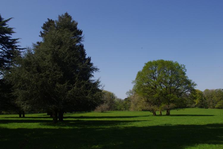 1_fête de l'arbre à Elven