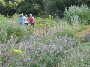 2_Le jardin d'une herboriste