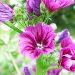 3__Le jardin d'une herboriste