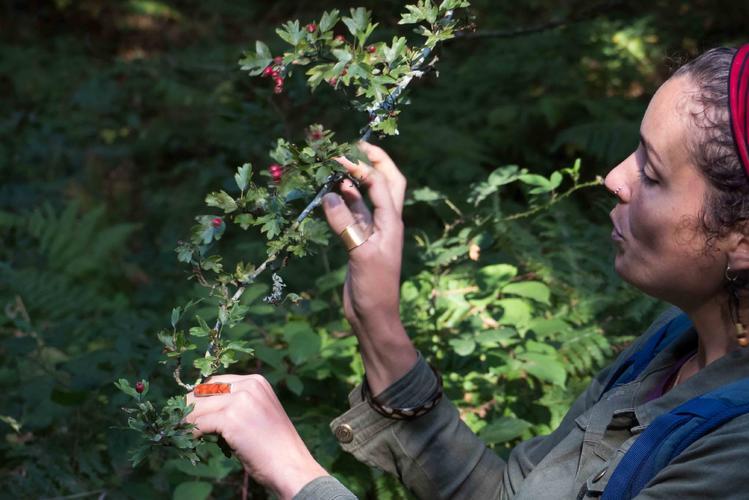 1_Découvrez les plantes sauvages comestibles et médicinales