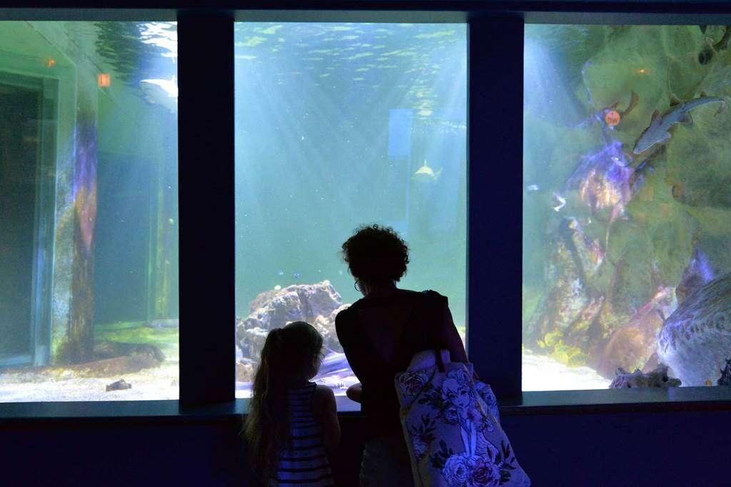 Aquarium-de-Vannes-Morbihan-Bretagne-Sud-103fr