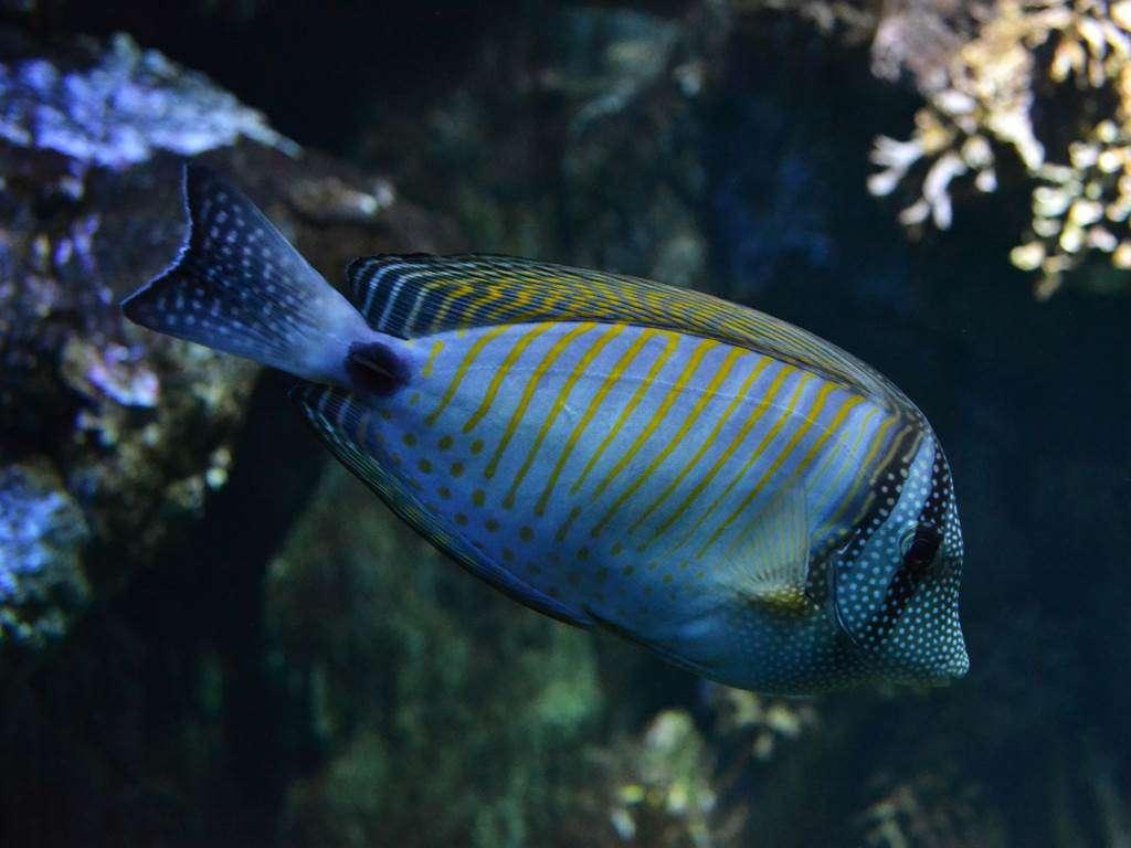 Aquarium-de-Vannes-Morbihan-Bretagne-Sud10fr