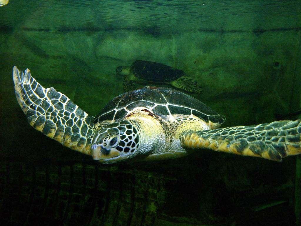 Aquarium-de-Vannes-Morbihan-Bretagne-Sud11fr