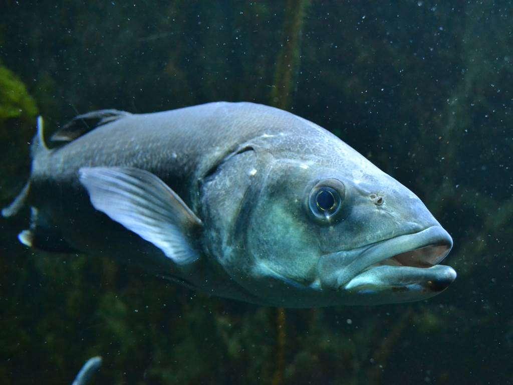 Aquarium-de-Vannes-Morbihan-Bretagne-Sud12fr