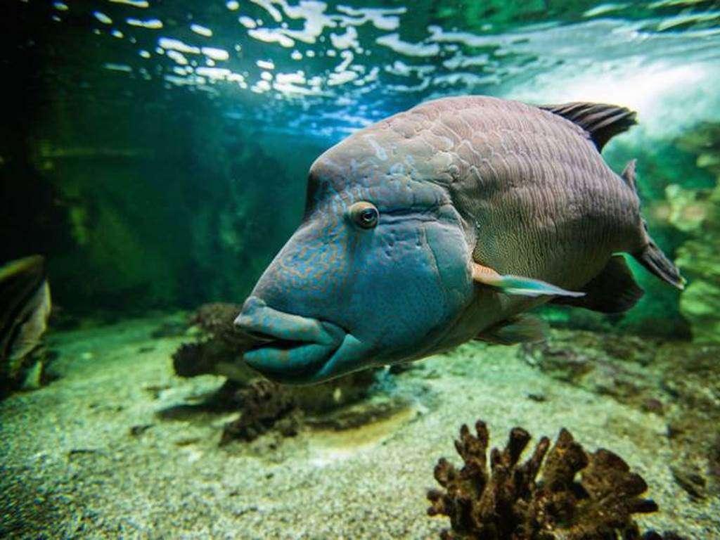 Aquarium-de-Vannes-Morbihan-Bretagne-Sud4fr