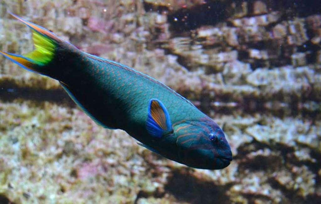 Aquarium-de-Vannes-Morbihan-Bretagne-Sud6fr