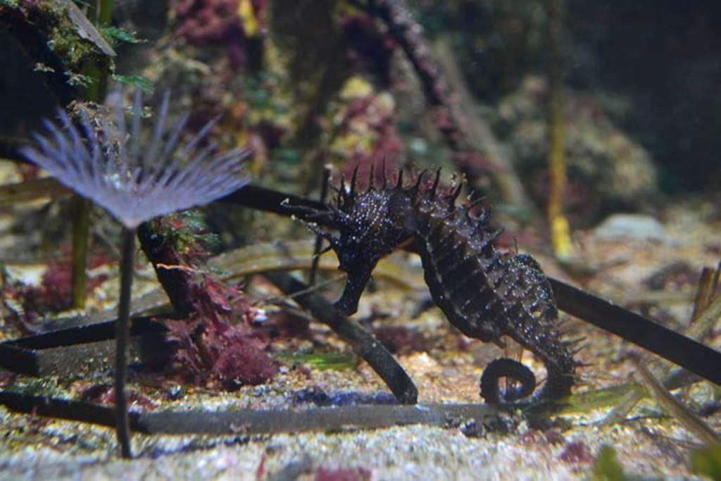 Aquarium-de-Vannes-Morbihan-Bretagne-Sud7fr
