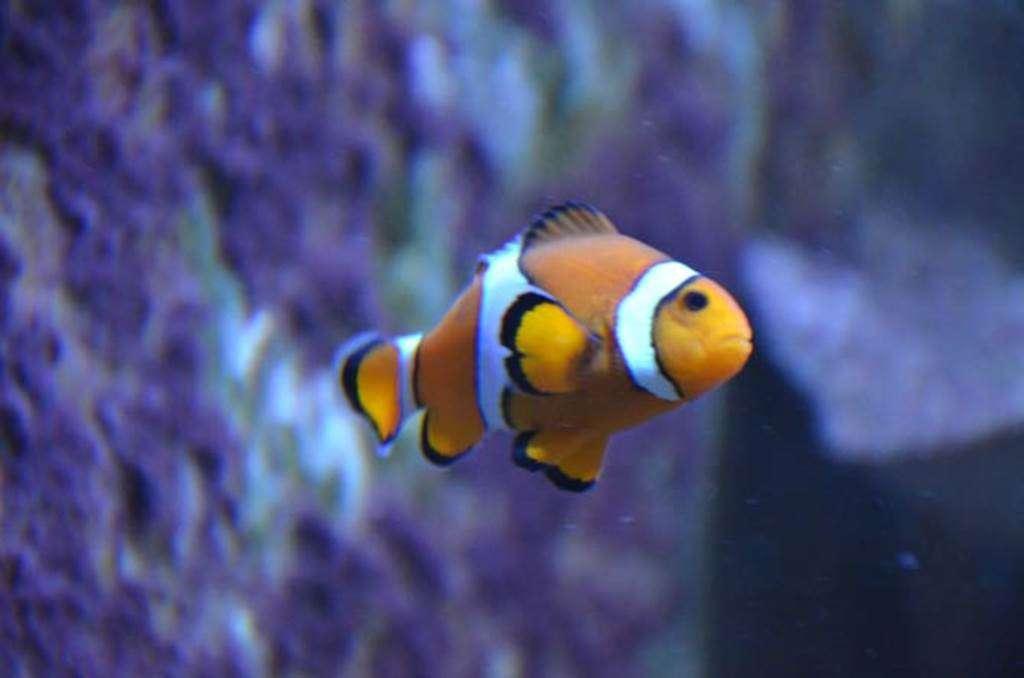 Aquarium-de-Vannes-Morbihan-Bretagne-Sud8fr