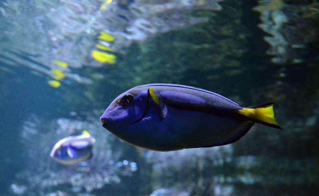 Aquarium-de-Vannes-Morbihan-Bretagne-Sud9fr