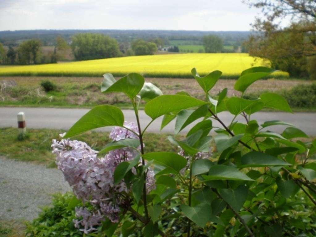 Clvacances---Meubl-56MS0096---Maison-de-campagne--proximit-de-Vannes---Plaudren---Morbihan-Bretagne-Sud8fr