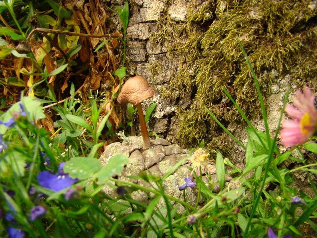 champignon-sur-une-pomme-de-pin15fr
