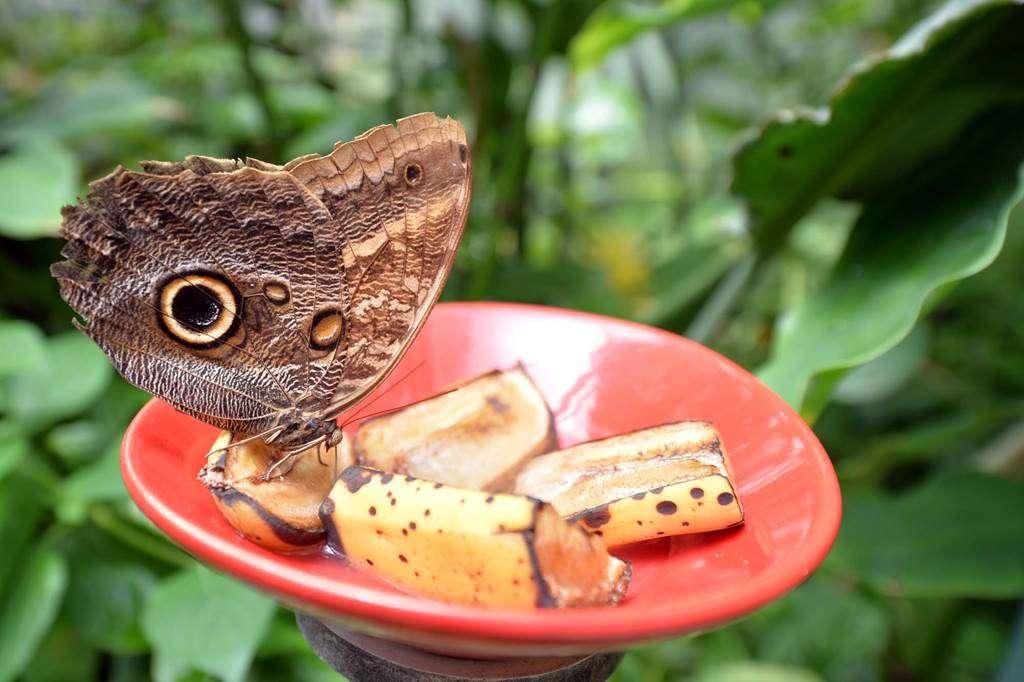 jardin-aux-papillons-morbihan-bretagne-sud-0815fr