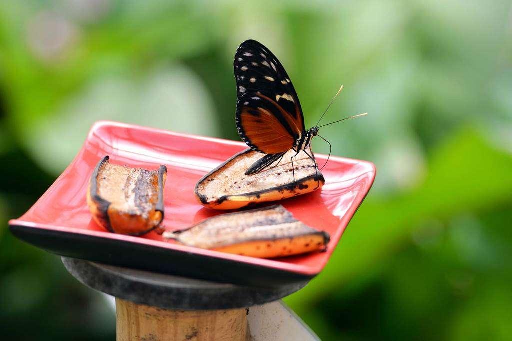 jardin-aux-papillons-morbihan-bretagne-sud-1219fr