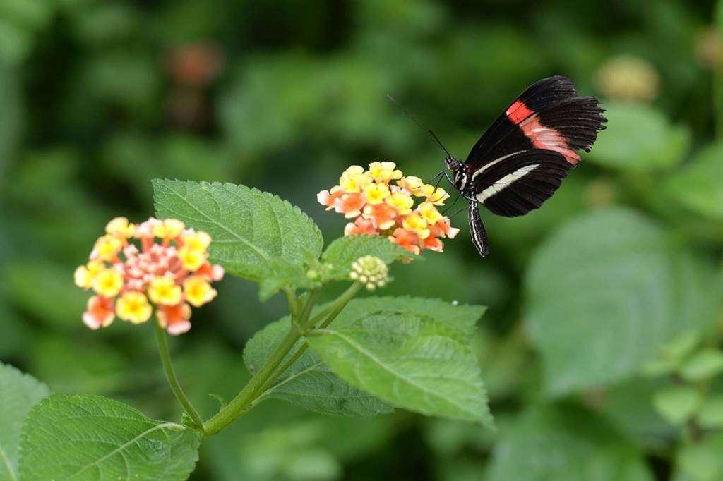 jardin-aux-papillons-morbihan-bretagne-sud-130fr