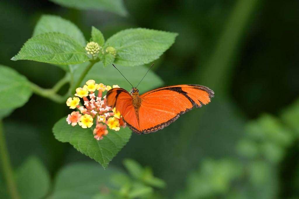 jardin-aux-papillons-morbihan-bretagne-sud-1421fr