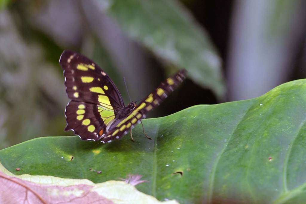 jardin-aux-papillons-morbihan-bretagne-sud-1623fr