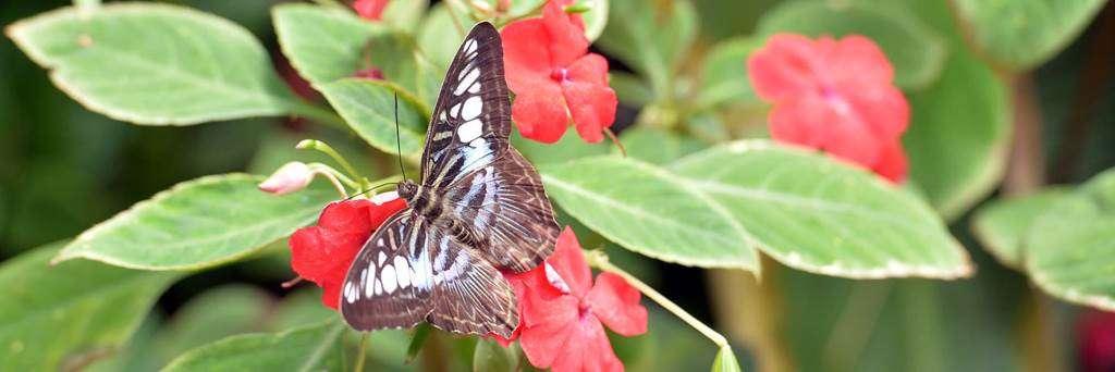 jardin-aux-papillons-morbihan-bretagne-sud-1724fr