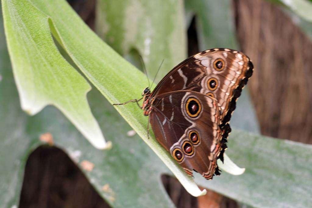 jardin-aux-papillons-morbihan-bretagne-sud-1825fr