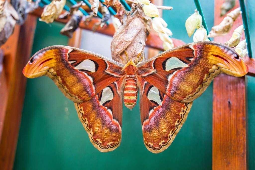 jardin-aux-papillons-morbihan-bretagne-sud-2229fr