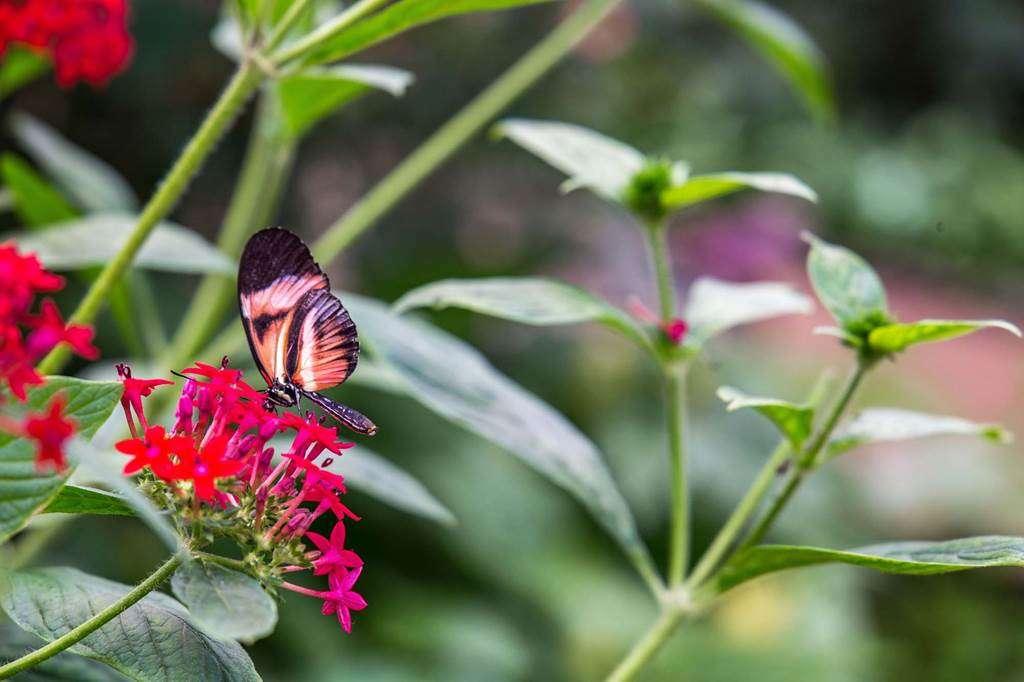 jardin-aux-papillons-morbihan-bretagne-sud-2330fr