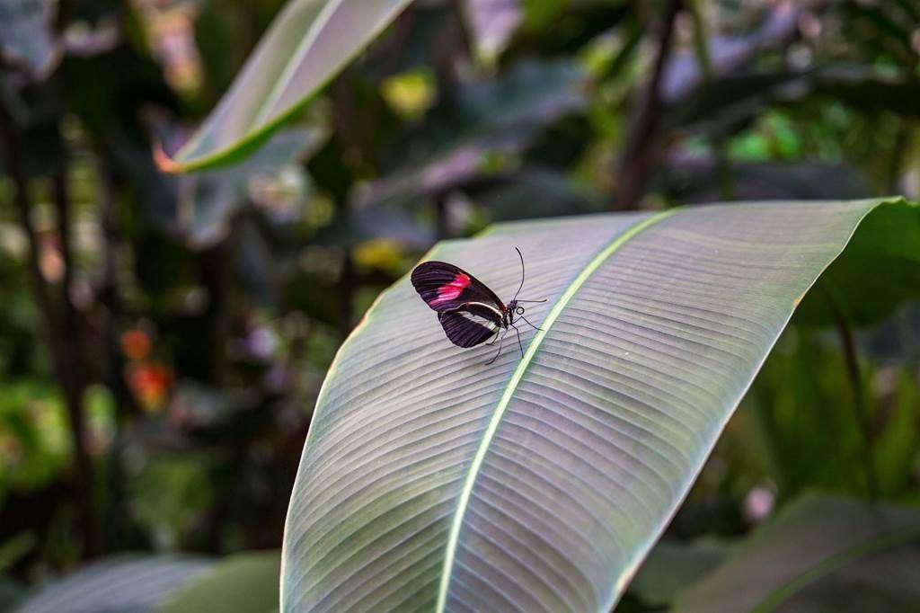 jardin-aux-papillons-morbihan-bretagne-sud-2432fr