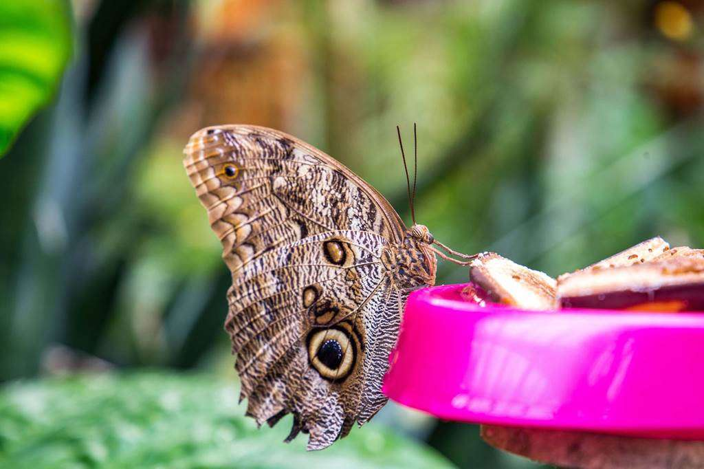 jardin-aux-papillons-morbihan-bretagne-sud-2531fr