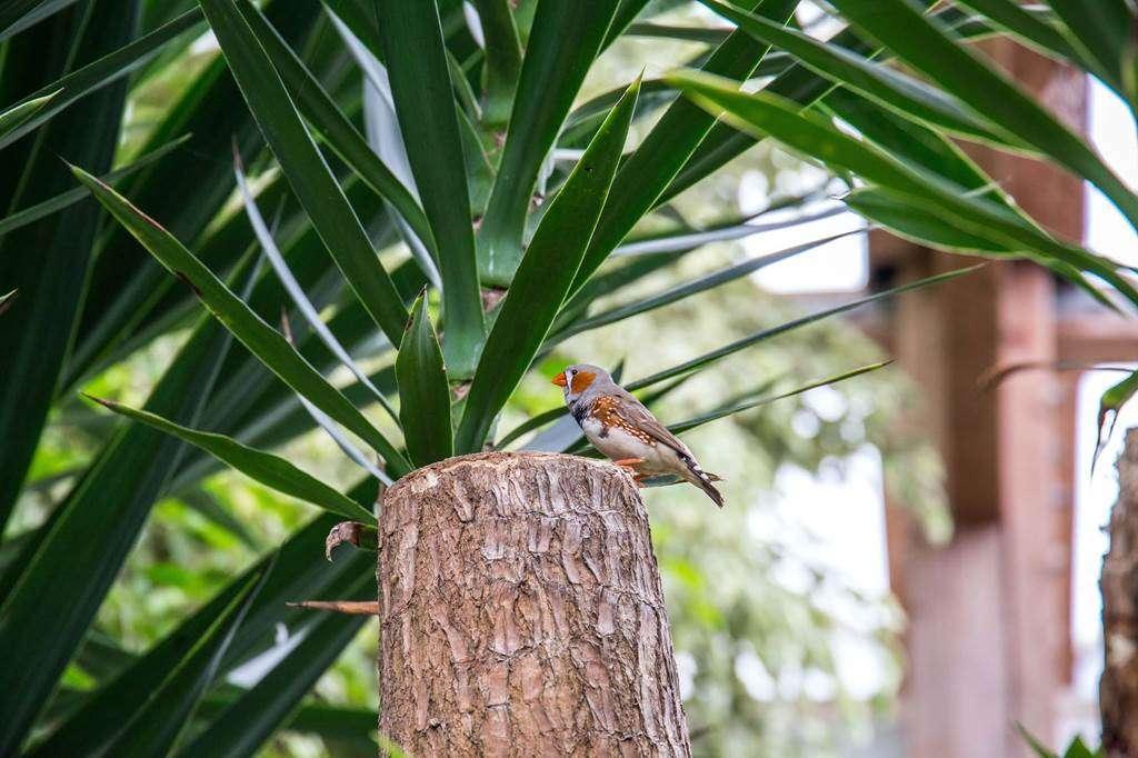 jardin-aux-papillons-morbihan-bretagne-sud-2633fr