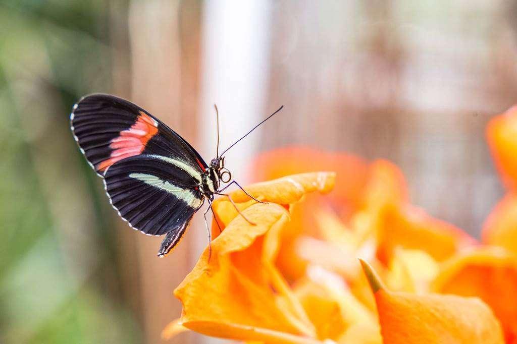 jardin-aux-papillons-morbihan-bretagne-sud-2734fr