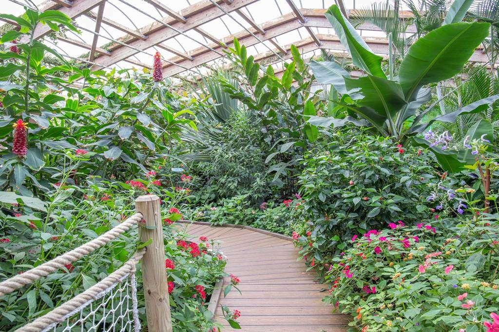 jardin-aux-papillons-morbihan-bretagne-sud-3037fr