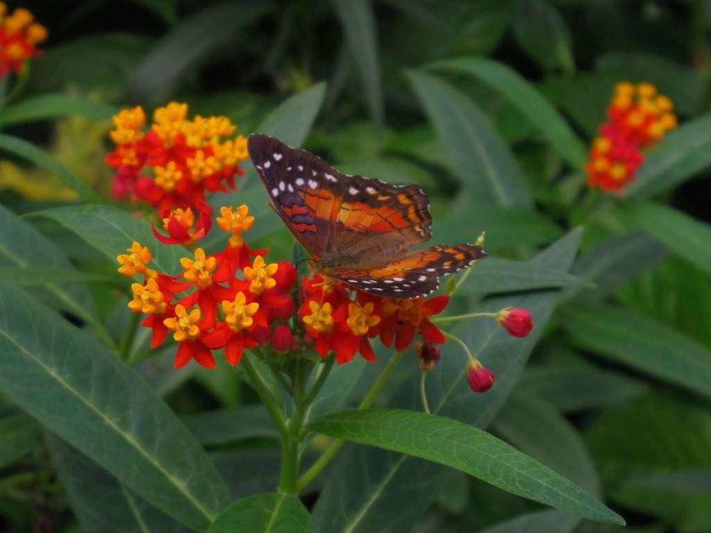 jardin-aux-papillons-morbihan-bretagne-sud1fr