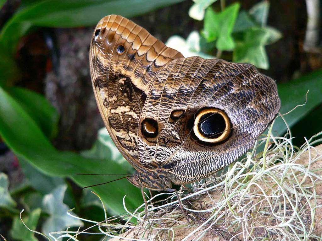 jardin-aux-papillons-morbihan-bretagne-sud2fr