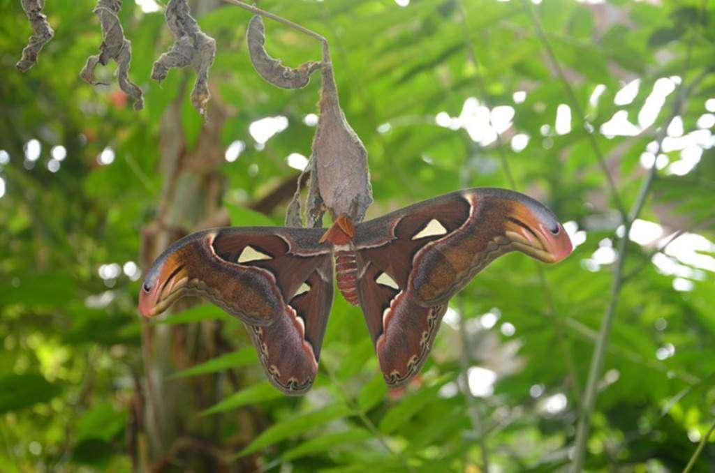 jardin-aux-papillons-morbihan-bretagne-sud6fr