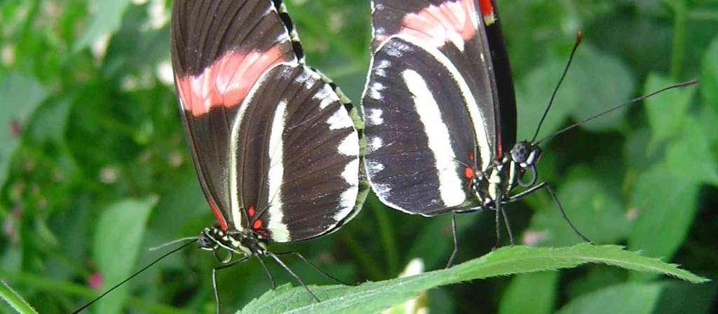jardin-aux-papillons-morbihan-bretagne-sud7fr