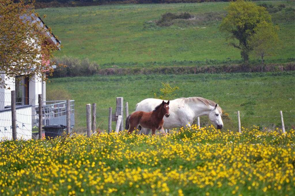 Clvacances---Meubl-56MS0794---Les-Hauts-de-Toulvern--cogte-tout-confort-au-calme-en-pleine-nature---Baden---Morbihan-Bretagne-Sud0fr