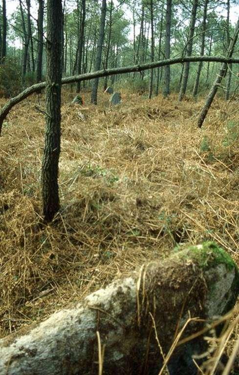 alignement-de-la-croix-pin-morbihan-bretagne-sud0fr